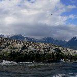 Beagle Kanalı Arjantin