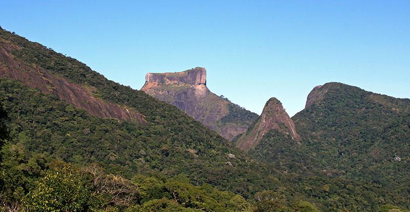 Brezilya Ormanları
