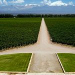 Mendoza Üzüm Bağları Arjantin