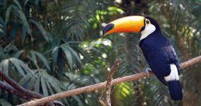 Amazon Ormanları Gezi