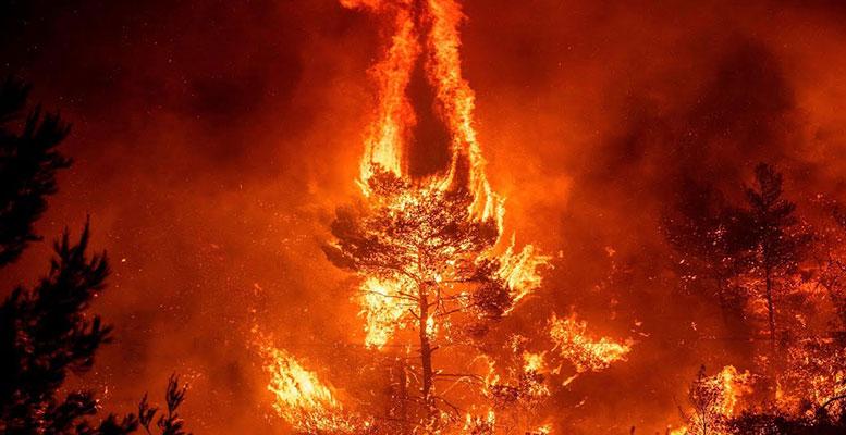 Amazon Yangın Felaketi