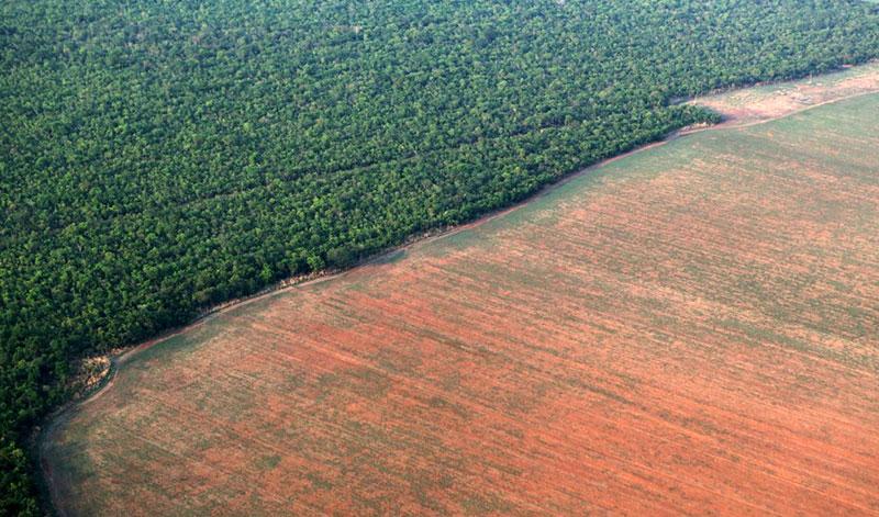 Amazon Ormanları Yok Oluyor