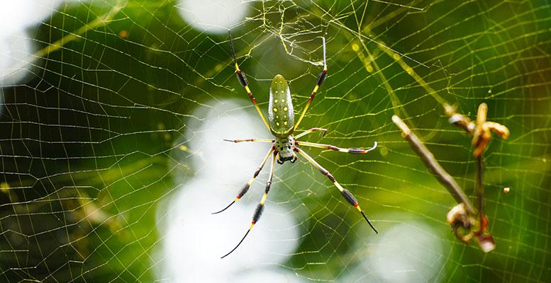 En Zehirli Örümcekler