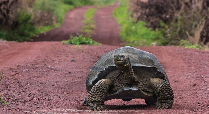 Galapagos Hayvanları