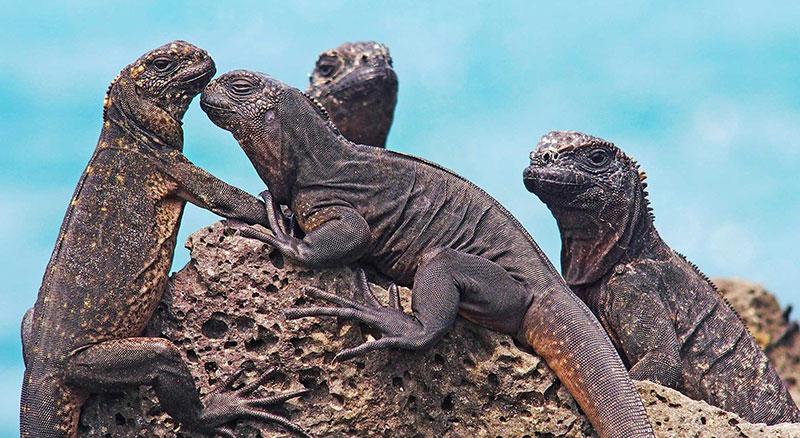 Galapagos Ada Hayvanları
