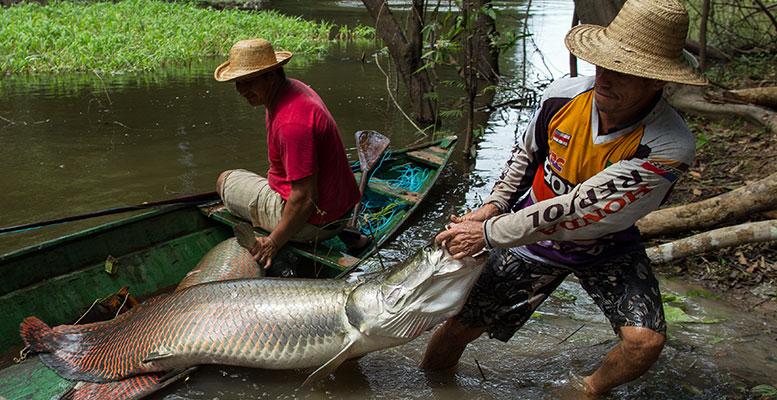 Amazon Nehri Balık Avı