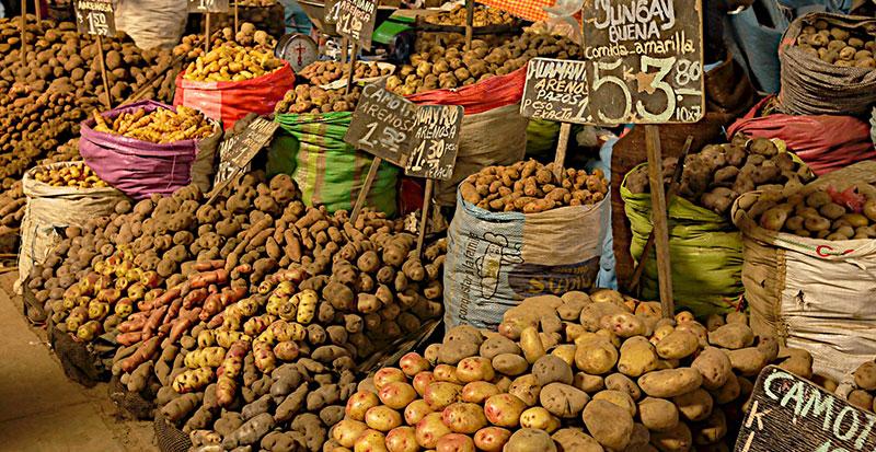 Peru Patates Çeşitleri
