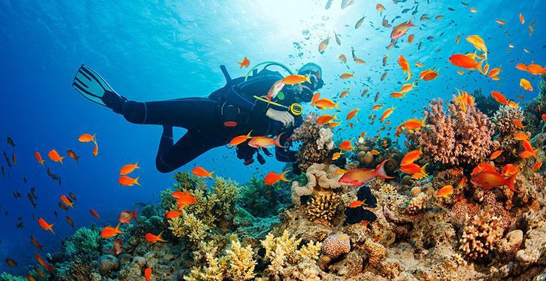 Marmaris ve Fethiye Scuba Diving Yerleri