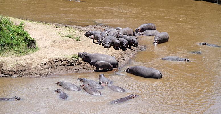 Afrika Hayvanları