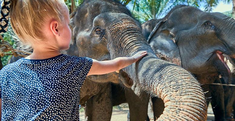 Tayland ElephantsWorld
