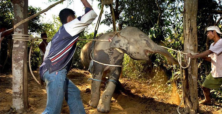 Fillere Yapılan İşkenceler