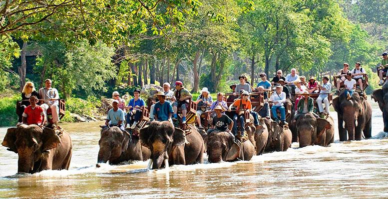 Tayland Fil Safarisi