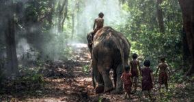 Fil Hayvanı Özellikleri