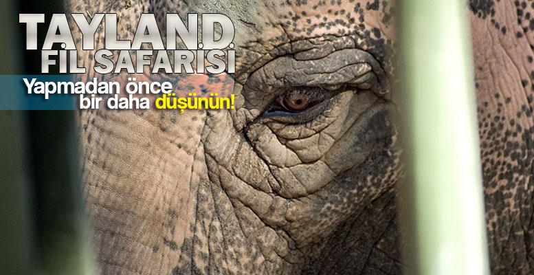 Tayland Fil Safarisi'nin Gerçek Yüzü