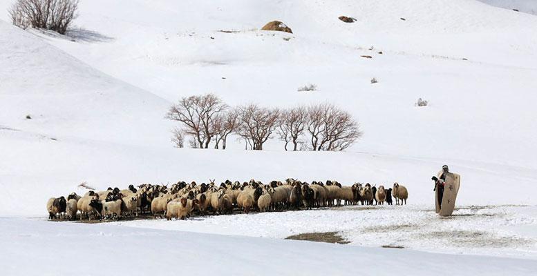 Doğuda Kış Çoban
