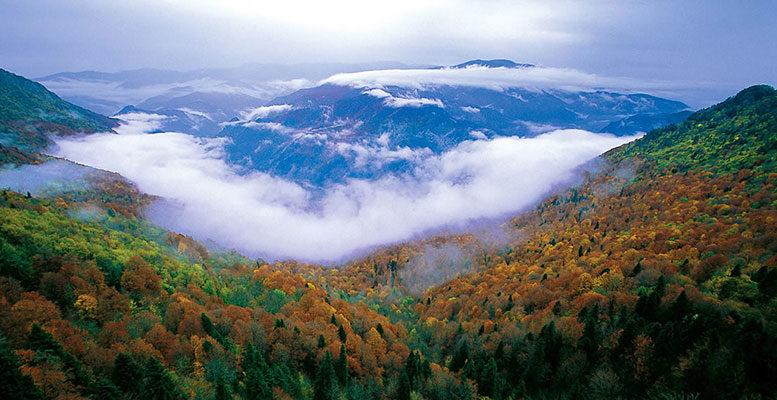 Yenice Kent Ormanı