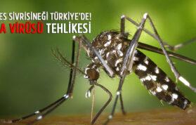 Zika Virüsü Türkiye
